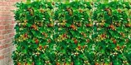 Вертикальные клумбы – больше зелени на квадратный метр