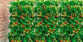 Фото - Вертикальные клумбы – больше зелени на квадратный метр