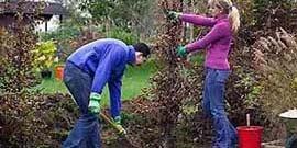 Живая изгородь из девичьего винограда – как скрыться от пыли и шума?