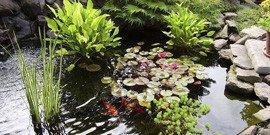 Растения для пруда на даче или как не превратить пруд в болото?