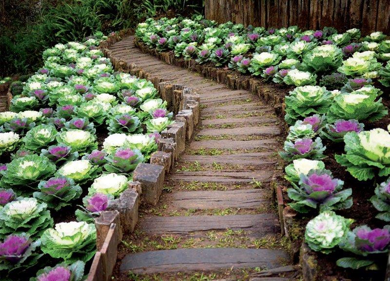 Украшение дорожек своего сада