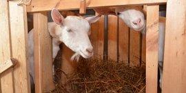 Фото - Сарай для коз – обустраиваем со всей ответственностью!