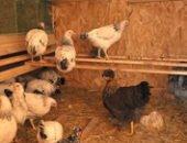 Фото - Сарай для кур – миниферма на своем участке
