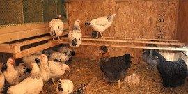 Сарай для кур – миниферма на своем участке