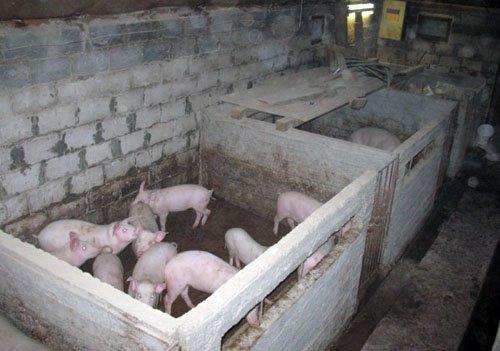 Свинарник своими руками фото