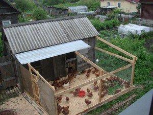 Где установить сарай для кур? фото