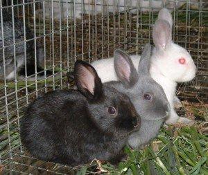 Фото кроликов в клетке летнего типа, groni.ru