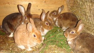 На фото - уход за кроликами, irkfermer.ru