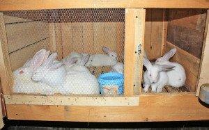 На фото - место для молодняка кроликов, kroliki66.ru