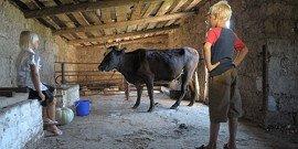 Сараи для скотины – как построить правильно?