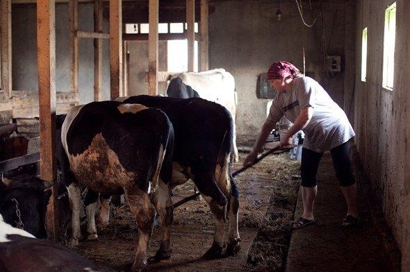 Сарай для коровы своими руками фото