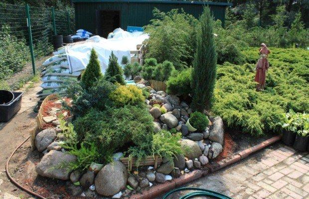 Вечнозеленые и низкорослые растения для ландшафта