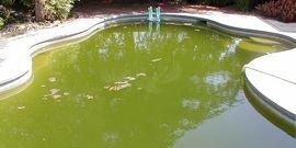 Как сделать воду в бассейне прозрачной и голубой с химией и без нее