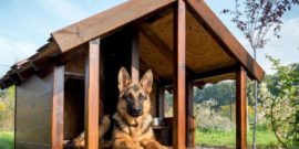 Как сделать будку для немецкой овчарки — правила обмера животного, составление чертежа и технология изготовления