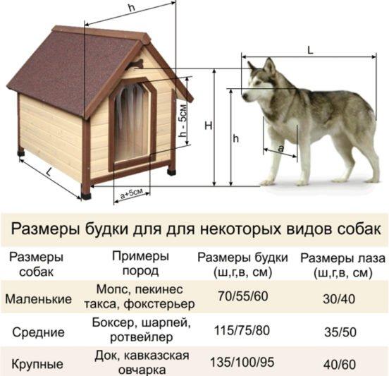 Правила обмера собак