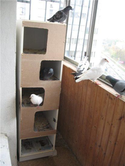 Голубятня на балконе: требования к размещению птиц в квартире