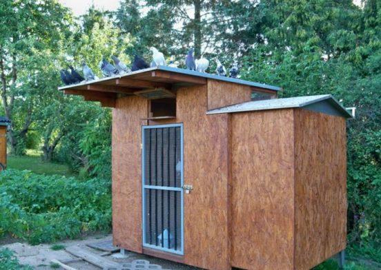 Голубятня с односкатной крышей