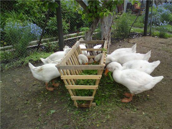 Вариант изготовления кормушки для гусей