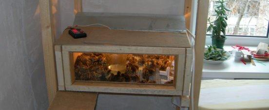 Брудеры для выращивания птенцов перепела