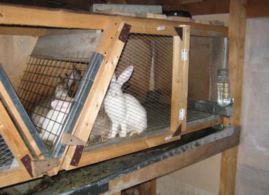 Клетка для молодых кроликов из дерева