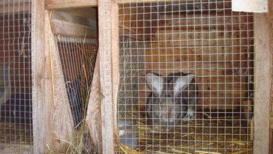 V-образная кормушка для кроличьей клетки
