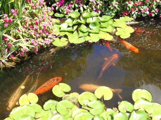 Небольшой водоём с рыбами