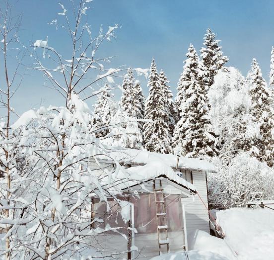 Дом на фоне заснеженных деревьев