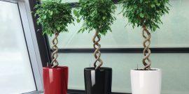 Топ-10 карликовых комнатных деревьев