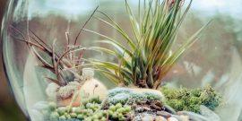 15 вариантов сада в аквариуме без воды своими руками