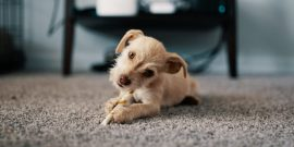 Как почистить ковёр от мочи животных: лучшие способы