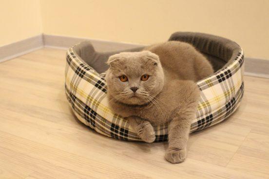 Кот в лежанке из клетчатой ткани