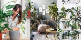 11 растений, которые создадут прекрасный микроклимат в вашем доме