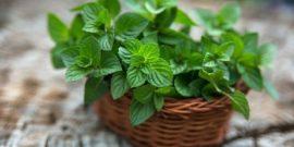 8 душистых домашних растений, которые принесут незабываемый аромат в ваше жилище