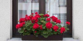 5 комнатных растений, которые улучшают энергетику в доме