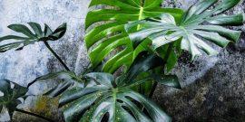 5 комнатных растений, которые влияют на отношения