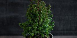4 комнатных растения, которые помогут защититься от вирусов и простуды