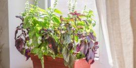 5 растений, которые отлично смотрятся на кухне