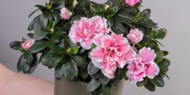 5 капризных растений, которые вряд ли приживутся дома, если вы не садовод со стажем